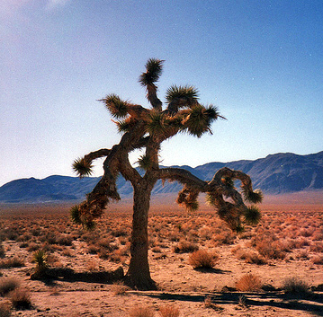 The Joshua Tree in 1994 by Joho345 www.atU2.com