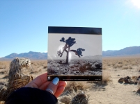 U2 joshua tree CD insert